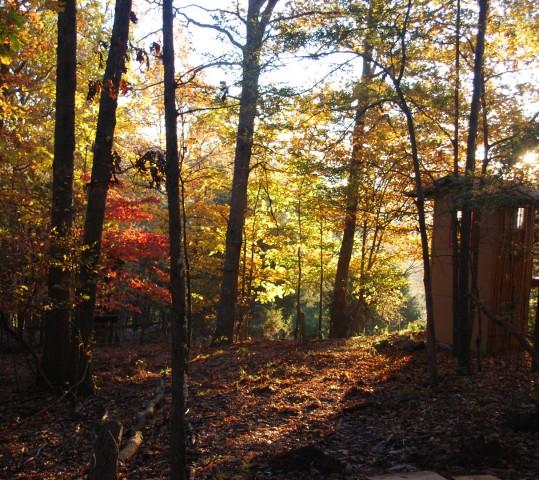 Fall Dharma Day