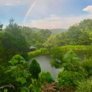 Eight-Day Intensive Retreat with Joy